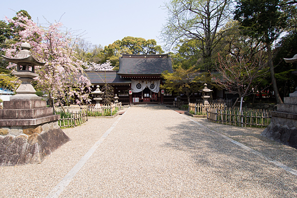 富部神社拝殿と境内