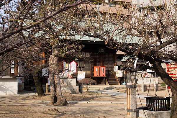 七尾神社拝殿と梅
