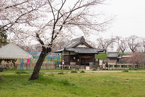 蛇池神社と桜